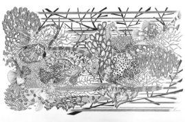Poissons coraux